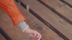 Girl`s hands feeding racoon in contact zoo stock video