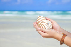 Girls hands holding nautilus shell against sea Stock Photos