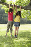 Girls Hanging From Tree Branch Royalty Free Stock Photo