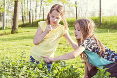 Girls in herb garden Stock Photography