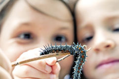 Girls hold caterpillars close-up Royalty Free Stock Photos