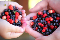 Girls holding forest berries in open palms, close up. Royalty Free Stock Image