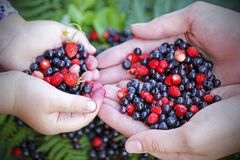 Girls holding forest berries in open palms, close up. stock images
