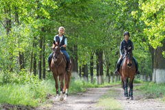 Girls on horseback riding. Two a young girls on horseback riding Stock Image