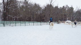 Girls jockeys on horses move in the paddock. Girls motion gallop. Cloudy quiet winter day. A little snow falls. Slow motion footag stock video footage