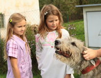 Girls - kids watching a dog Stock Images