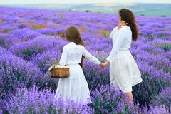 Girls are in the lavender flower field, beautiful summer landscape stock image