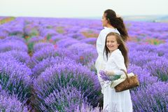 Girls are in the lavender flower field, beautiful summer landscape stock photography
