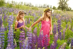 Girls walking in the field of lupine in the evening, holding hands royalty free stock photography