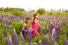Girls walking in the field of lupine in the evening, holding hands royalty free stock images