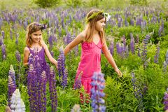 Girls walking in the field of lupine in the evening, holding hands stock photo