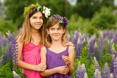 Girls walking in the field of lupine in the evening, holding hands royalty free stock photo