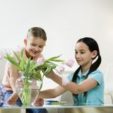 Girls looking at flowers. Two girls looking at flowers on table Stock Image