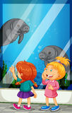 Girls looking at manatee swiming in the tank Royalty Free Stock Image