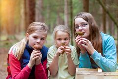 Girls on a mushroom foray royalty free stock image