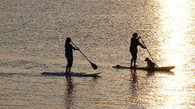 Girls paddle boarding on the Exe estuary in Devon UK. Girls with dog enjoying paddle boarding on the Exe estuary in Exmouth Devon UK #Exmouth Royalty Free Stock Photography