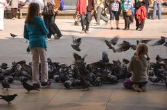 Girls and pigeons stock images