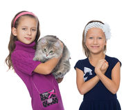 Girls play with a cat Royalty Free Stock Photo