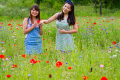 Girls play ring flower in poppy field Stock Image