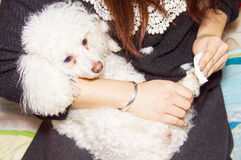 Girls Poodle Stock Photography