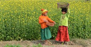 Girls in Rapeseed Royalty Free Stock Photo