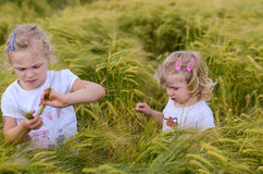 Girls in a rye field Royalty Free Stock Image