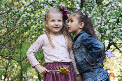 Girls sharing secrets among spring garden. Two girls sharing secrets among spring garden Stock Photos