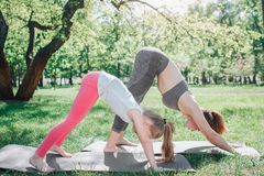 Girls are standing in dog position. They are stretching and keeping balance. Girls are concentrated on excercise. Yoga. And Pilates Concept royalty free stock photos