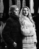 Girls with strict faces in black and white fur coats. Women with blond hair in fur coats in fur shop. Fashion and elegance concept. Women with makeup shopping royalty free stock photography