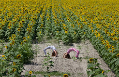 Girls in sunflower field Royalty Free Stock Image