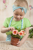 Girls  of three years care for flowers,. Two charming girls twins of three years play gardeners, water a yellow primrose in a pot, a beautiful, life-pleasing Royalty Free Stock Photography