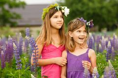 Girls walking in the field of lupine in the evening, holding hands stock images