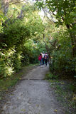 3 girls walking at national park. Surrounding by trees Stock Images