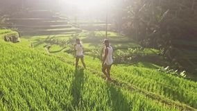 Girls Walking in Rice Terraces Aerial slow motion. Two girls walking in a big and beautiful rice field. Aerial shot in 50FPS in FHD stock video footage