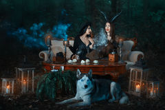 Girls witch in the woods conjure. Girls of the witch in the wood cook a magical potion, the wolf lies nearby Royalty Free Stock Photography
