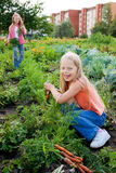 Girls working in vegetable garden Royalty Free Stock Photography