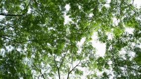 Giro alrededor del árbol del follaje del verde en el parque público almacen de metraje de vídeo