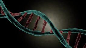 Giro da costa do ADN video estoque