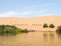 Giro dei cammelli Immagine Stock Libera da Diritti