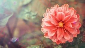 Giro del brote de flor rojo del verano almacen de metraje de vídeo