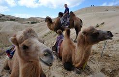 Giro del cammello Immagini Stock Libere da Diritti