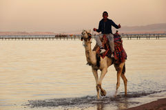 Giro del cammello Immagine Stock