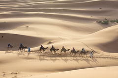 Giro del cammello al Marocco Immagini Stock