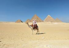 Giro del cammello dalle piramidi di Giza Fotografia Stock