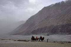 Giro del cammello in deserto Immagini Stock Libere da Diritti