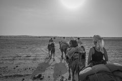 Giro del cammello nel deserto del Ragiastan, India Fotografia Stock