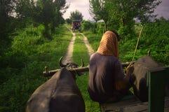 Giro del carretto di Bullock nel Bengala Occidentale fotografia stock libera da diritti