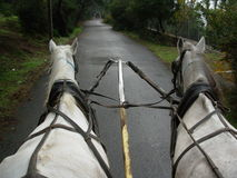 Giro del cavallo Immagine Stock