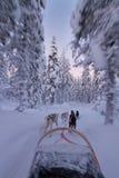 Giro del husky al tramonto Fotografia Stock Libera da Diritti