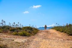 Giro del motociclo nella campagna di Malta Fotografie Stock